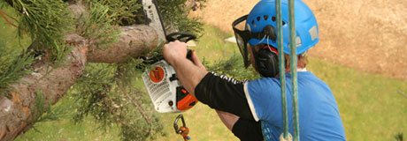 Tree Surgeon - tree surgeon derbyshire