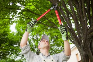 Tree Pruning in Glossop