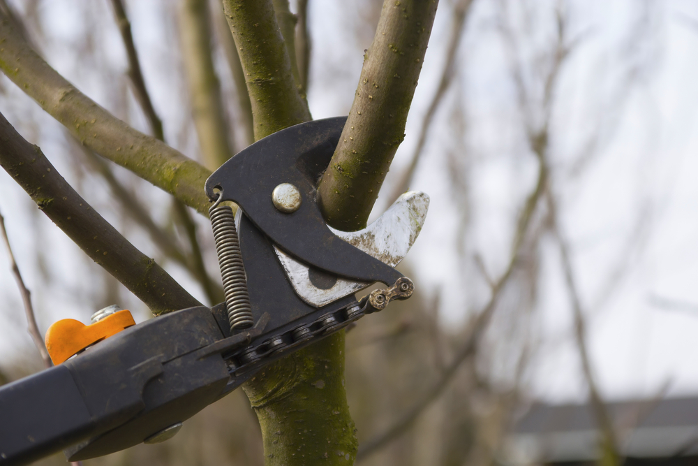Tree Pruning Tips
