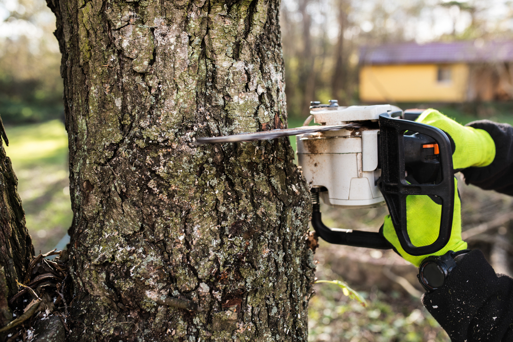Tree Surgeon in Buxton